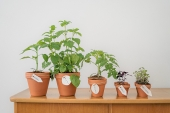 10 Crucial Tips for Growing Your Own Herb Garden