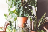 The Benefits of Bringing Plants Into Your Home