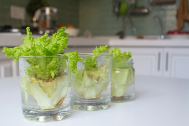 How to Start a Garden Using Vegetable Scraps