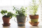 How to Start an Indoor Garden: Internal Growth