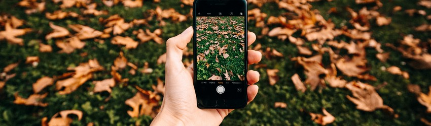 A person sits on their phone taking photos of leaves on the ground during fall.