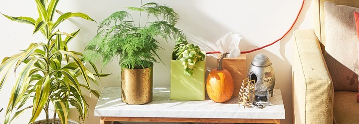 Some plants are thriving on a shelf that someone has put in a sunny spot next to a pumpkin and a rocket ship figurine.