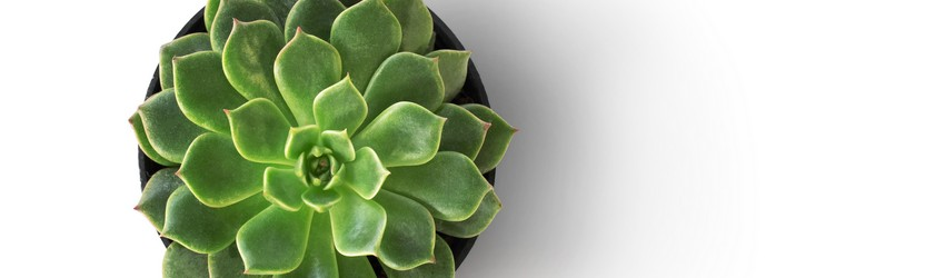 A succulent cactus plant sitting on a table in the kitchen.