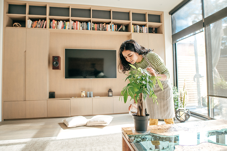 Woman is feng shuing her apartment by moving a plant.