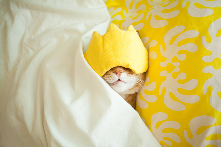 A white cat is wearing a yellow sleep mask while laying under a yellow blanket.