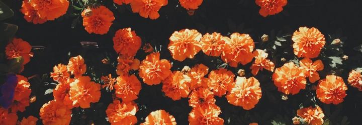 Some orange flowers in a bush.
