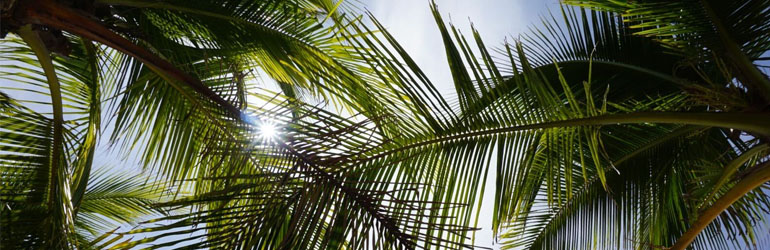 Some palm leafs against a blue sky.