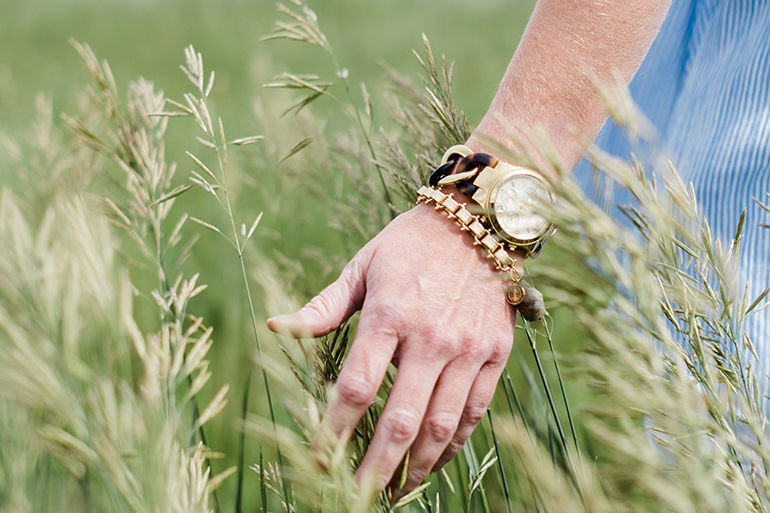 A hand wearing a gold watch runs through some tall grass.