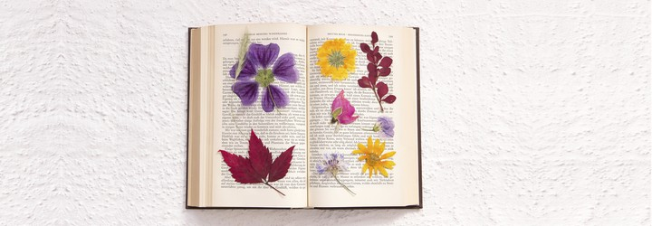 Pressed flowers sit in the pages of an old book.