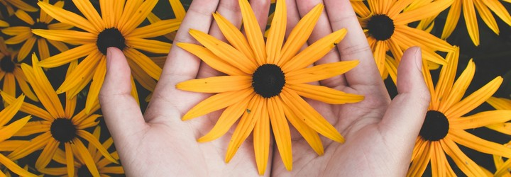 A person holds a yellow daisy flower in their hands among a background of flowers.