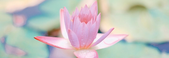 A lotus flower representing peace and tranquility.